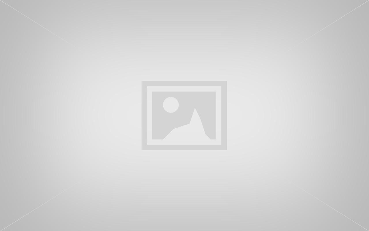 Louka et les chiots havanais