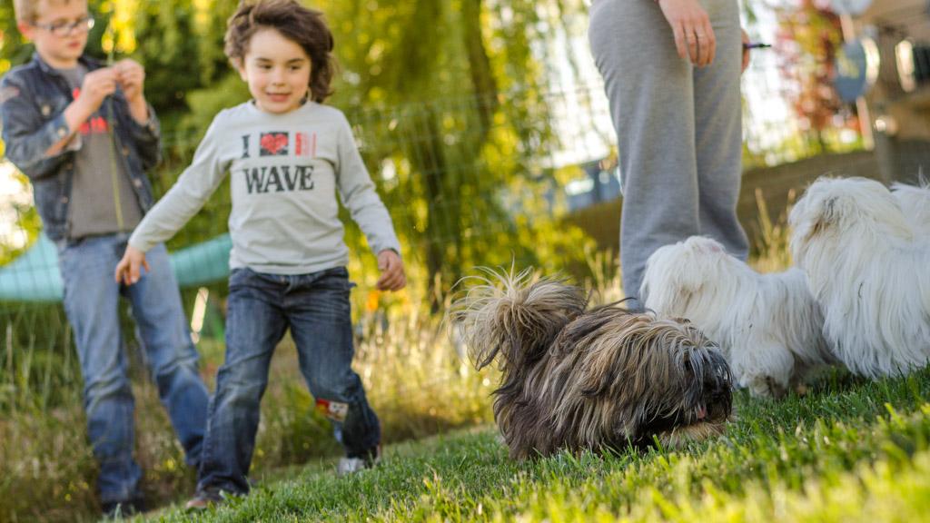 Les chiens dans le jardin avec nos enfants