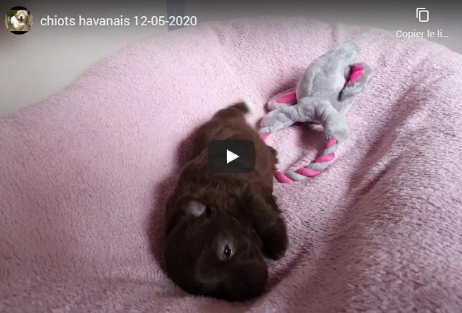 Première Vidéo de nos chiots nés le 19-05-2020