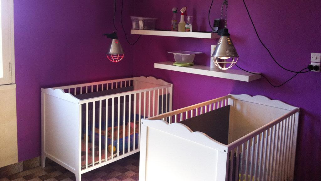 Maternité pour nos petits Bichons Havanais