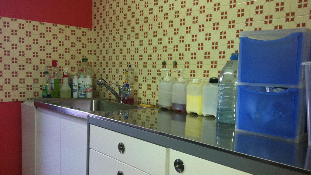 Toilettage Bichon Havanais